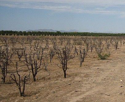 Terrain de 5HA à la vente   Rte Ouarzazate
